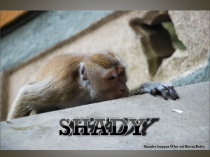 Photo of macaque monkey crouched to the side of a wall, peering over with one paw on the wall. Text: SHADY